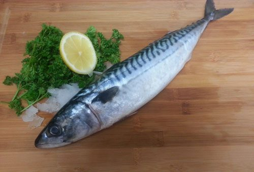 Fresh Whole Mackerel